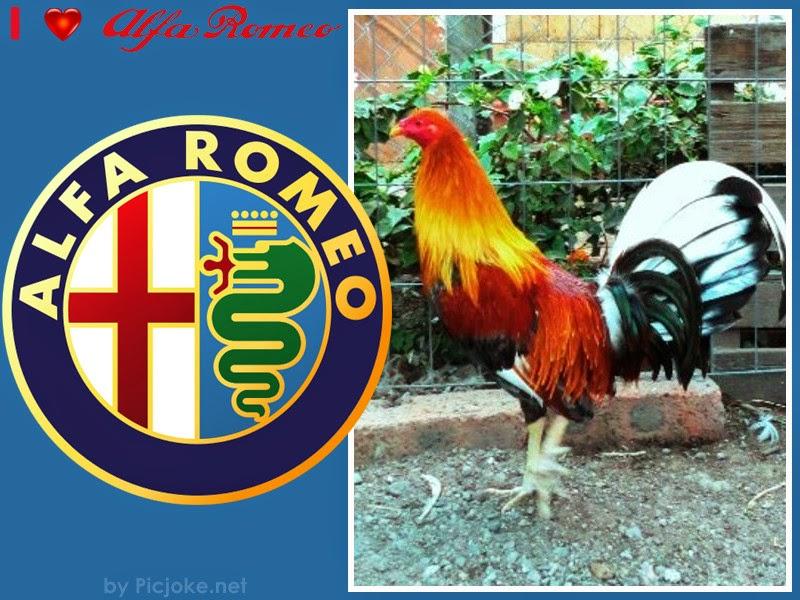 Ver Galería de Fotos de Gallos de Pelea del Mundo: LOS CLARET