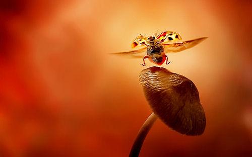 Catarina bailando - Dancing ladybird by Leon Baas