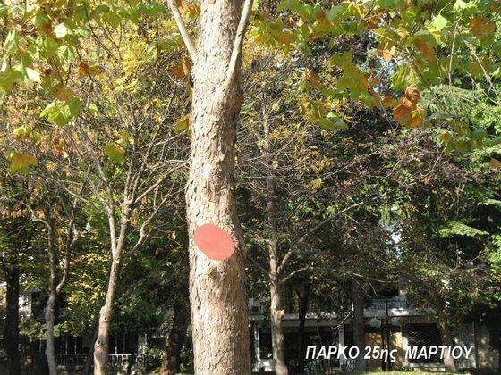 Ρημάξανε τα δέντρα στο πάρκο 25ης Μαρτίου