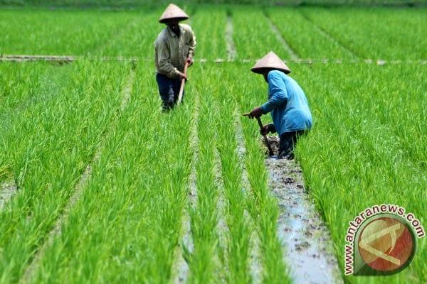 Dunia Agraris Kearifan Lokal Dibidang Pertanian