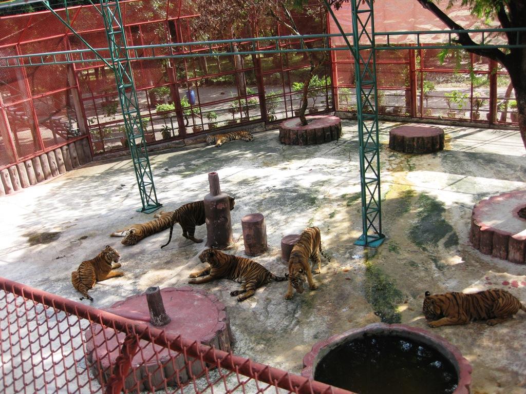 Camilles Samui Info blog: Sriracha Tiger Zoo, near Pattaya