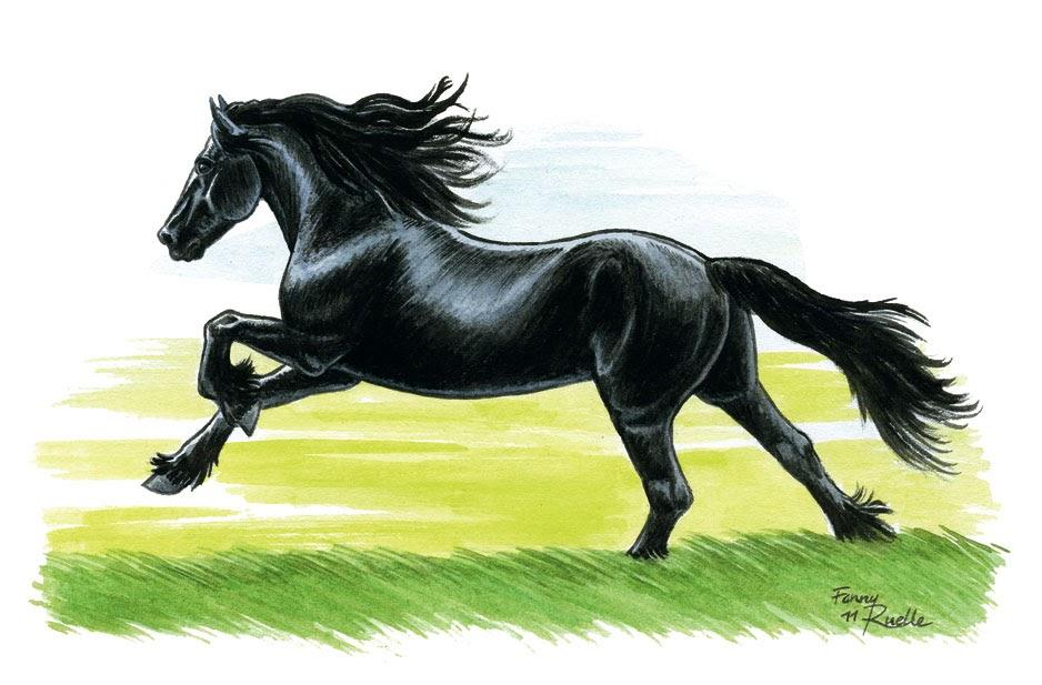 Un jour un cheval un frison noir comme la nuit - Dessin de cheval magnifique ...