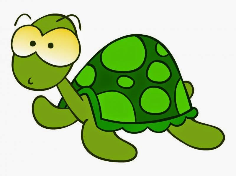 Datos Curiosos Sobre Las Tortugas