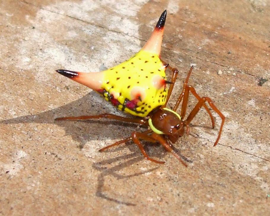 Entomologia Las arañas: