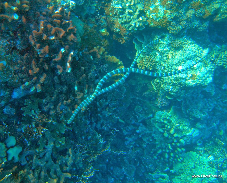 Еще две морские змеи фото