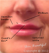 Diagram of the lips showing points of interest