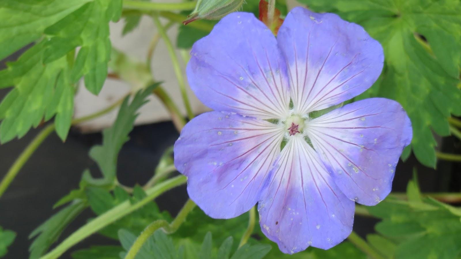 Hortibus fleurs de printemps 10 plantes pour reussir for Fleurs jardin printemps