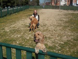 Cuidado de mascotas madrid