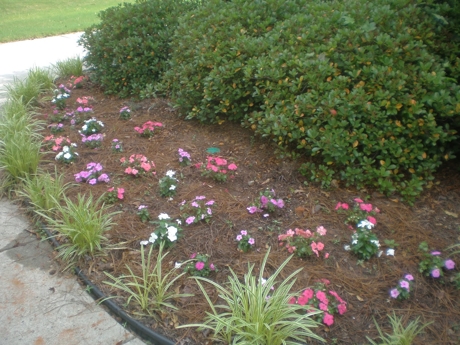 One woman 39 s story radiation and other spring activities for Flower bed in front of house