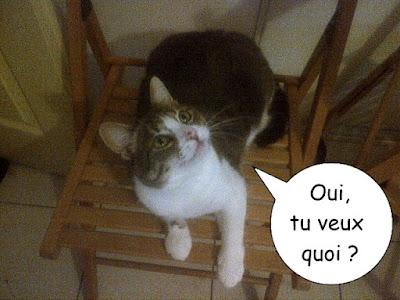 Gentil chat sur une chaise.