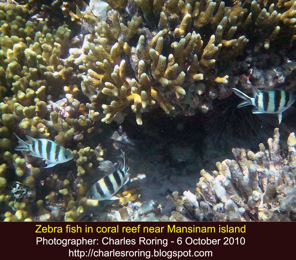 Raja Ampat Snorkeling And Birding Adventure: Snorkeling