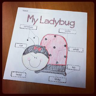 Ladybugs And Ladybug Family on Ant Preschool Worksheets