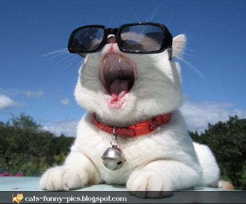 Animals with sunglasses - photo#25