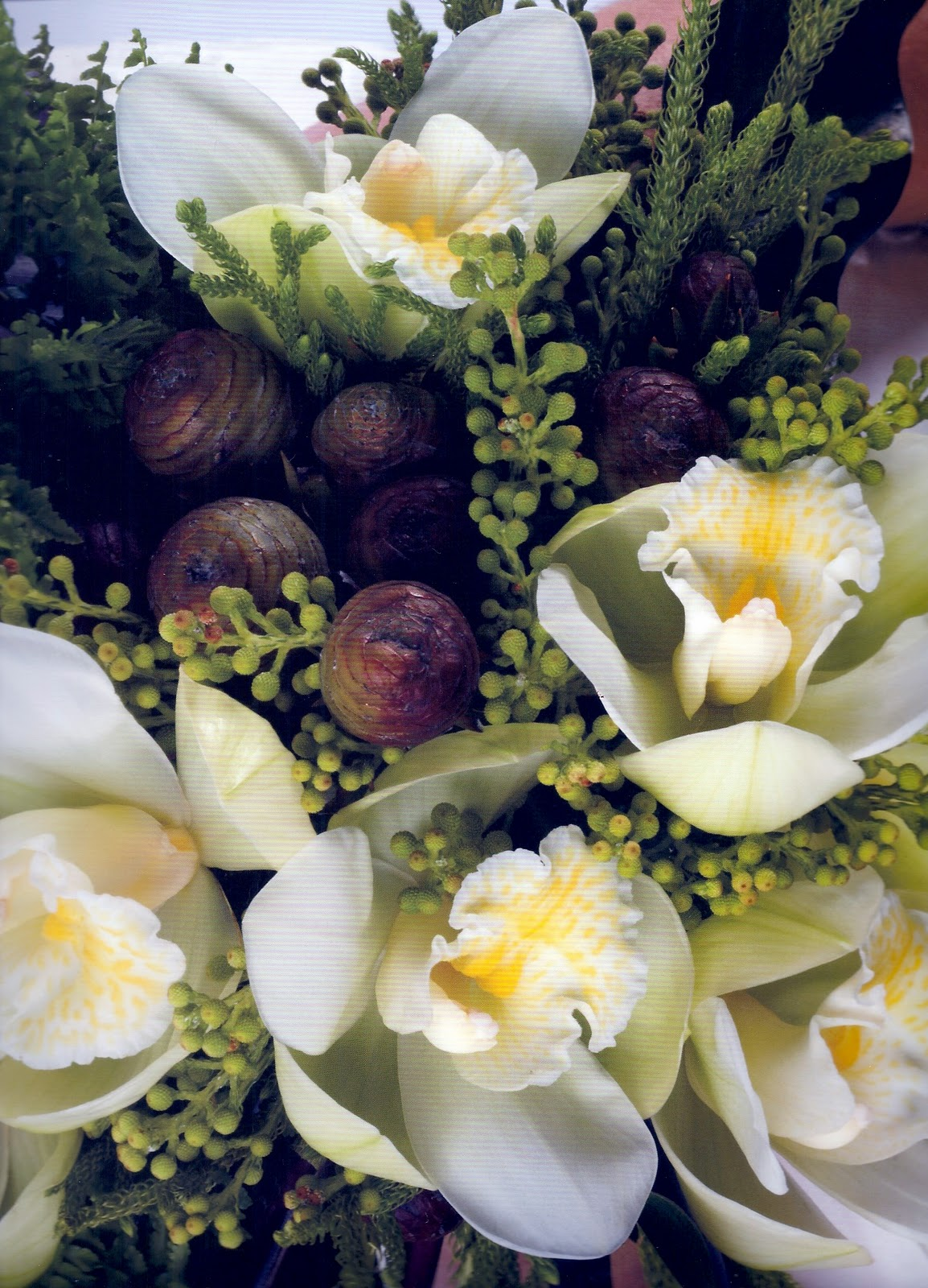 Cymbidium Orchids Hawaii Cymbidium Orchids Berzelia