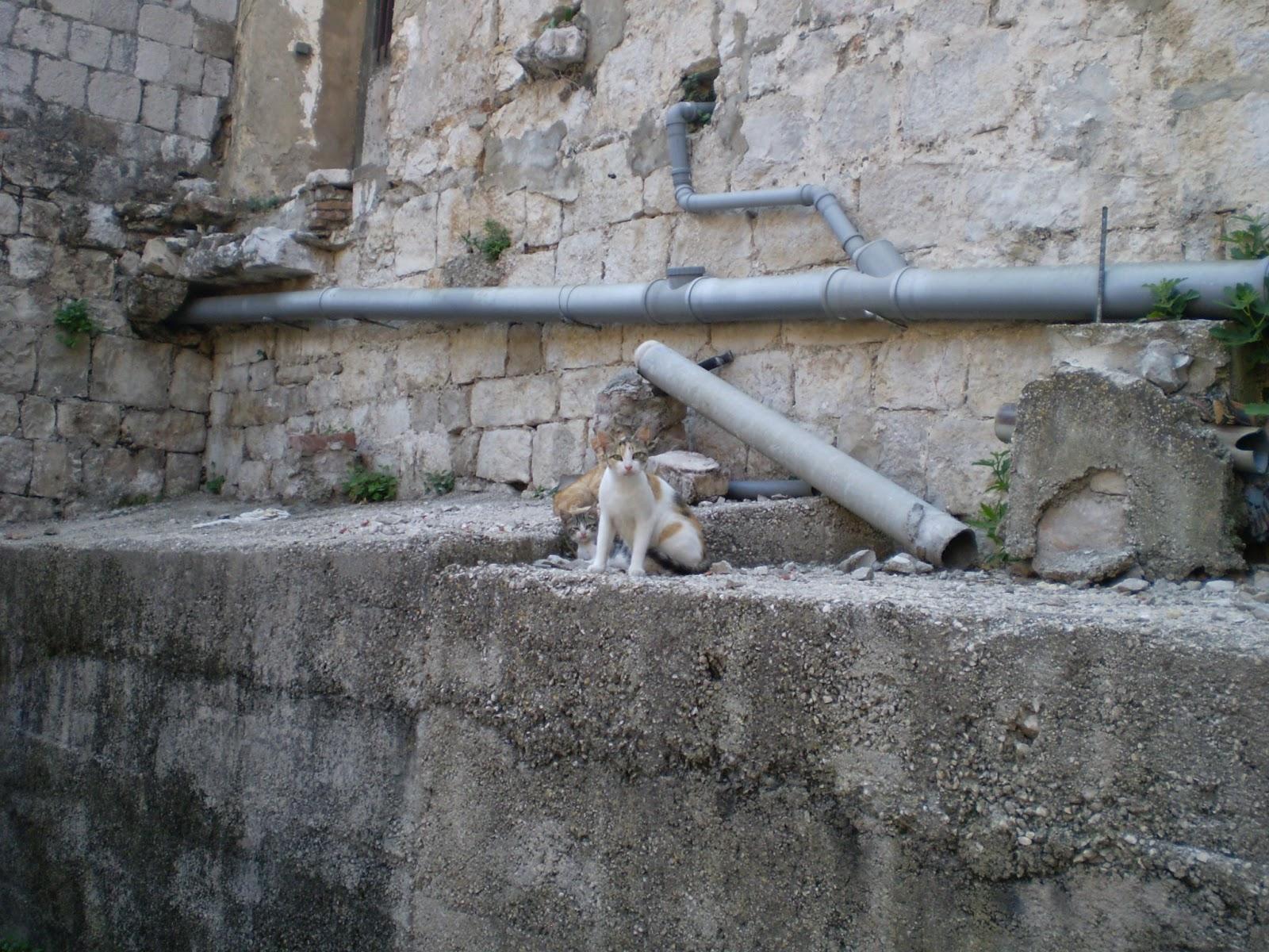Коты-Дубровника