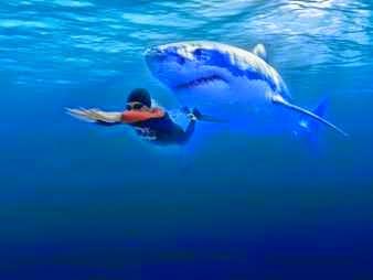 Tiburón blanco persiguiendo nadador
