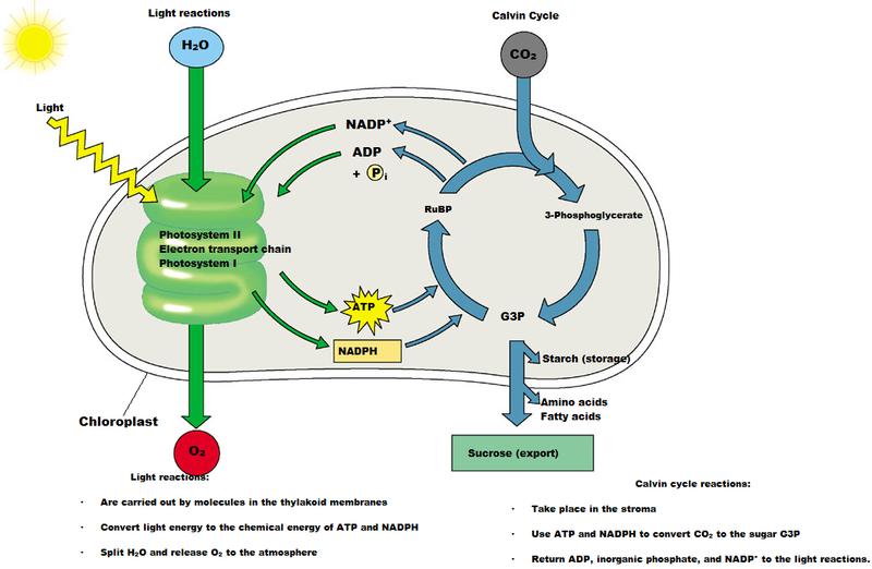 Ap Biology Blog