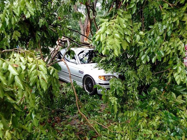 kereta bmw dihempap pokok