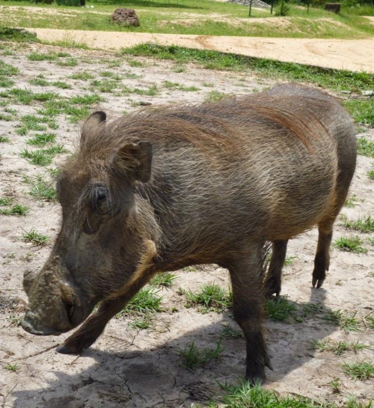 10 - Warthog