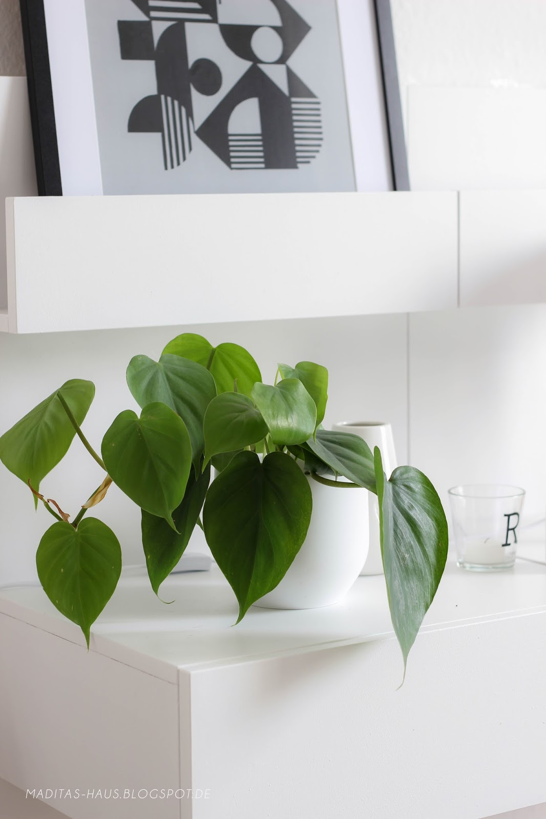 I plants maditas haus lifestyle und interior blog for Trend pflanzen