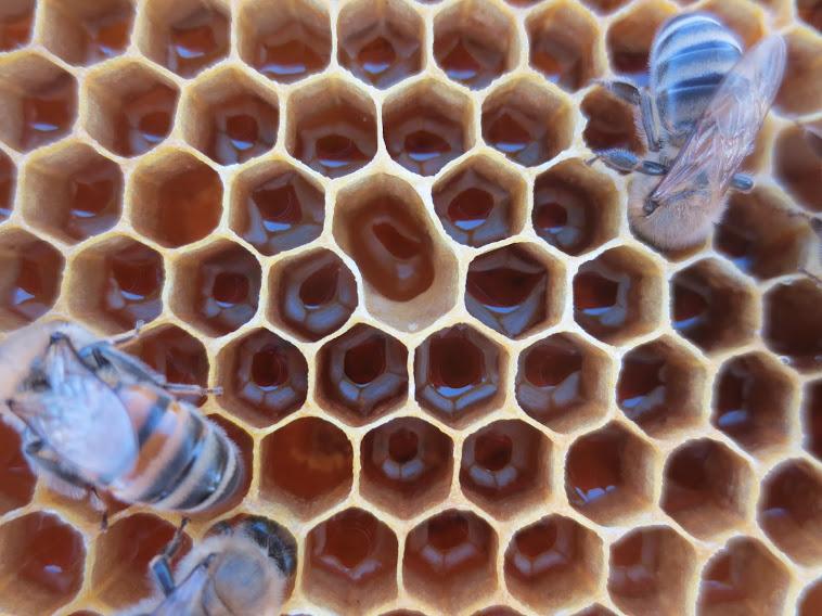 ...ή το Excel  έχει επηρεαστεί απ' τις μέλισσες  ή αυτές ξέρουν καλά το Excel …