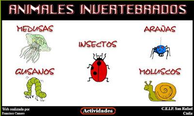 http://www.ceiploreto.es/sugerencias/averroes/ceip_san_rafael/INVERTEBRADOS/index.htm