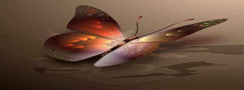 Imagenes Mariposas Para Facebook Fondos Para Facebook Mariposas