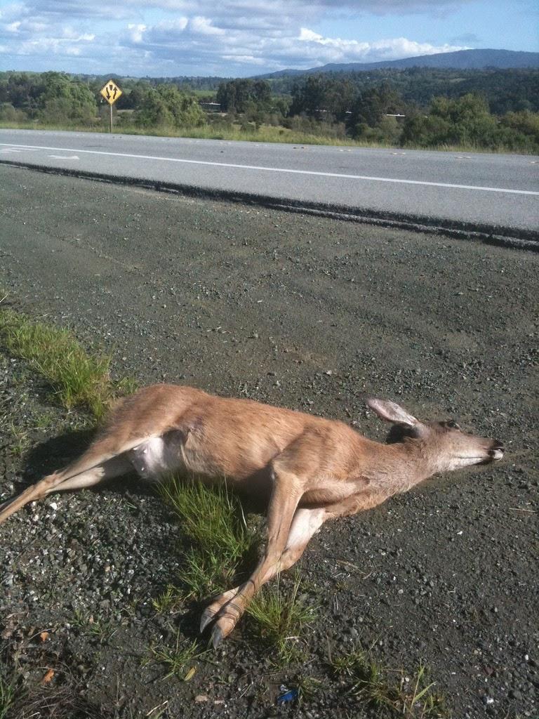 dead_deer.jpg
