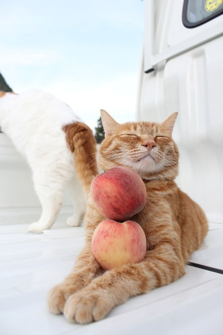 cat produce