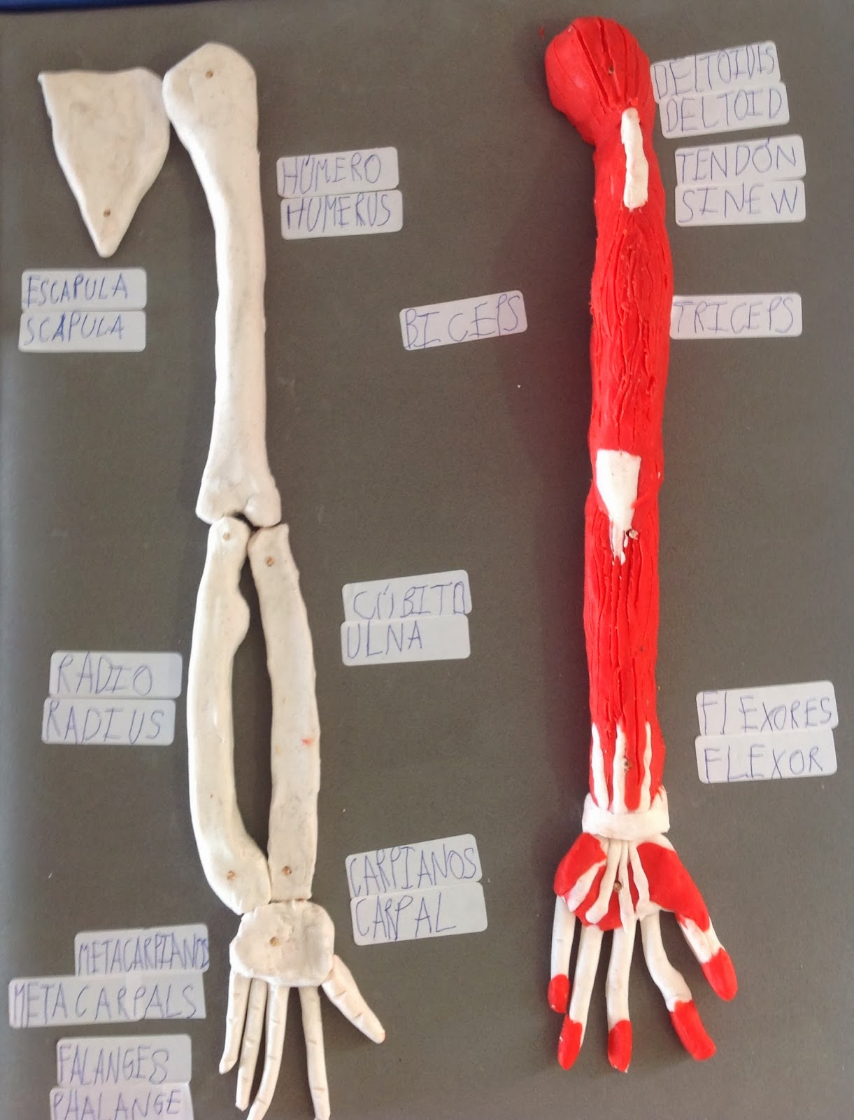 Our Third Graders: Science Projects: The Human Body