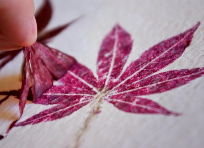 Impresiones naturales de plantas y flores en papel de acuarela7