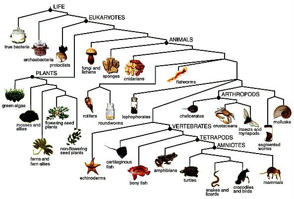 Phylum Chordata Animals List Miles Lawrence: Nine M...