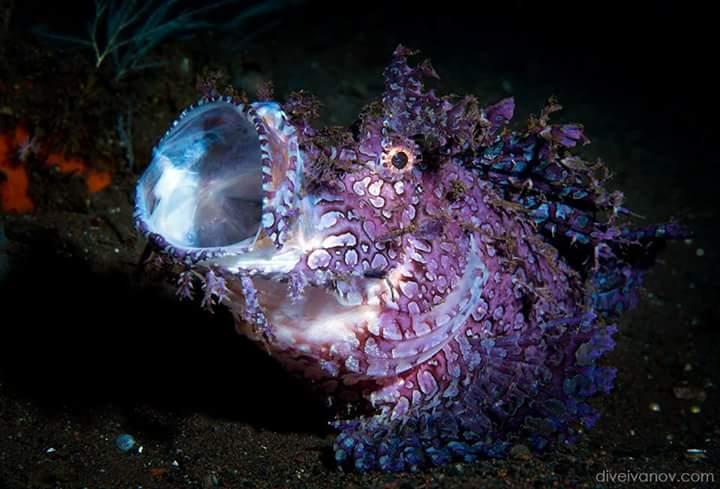 Los parásitos de la alga a la persona