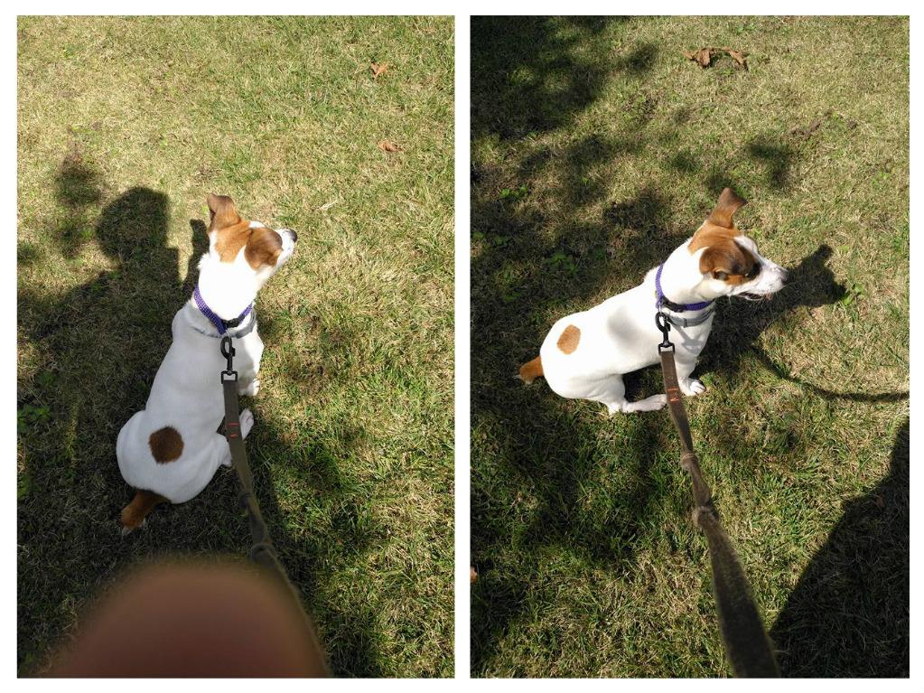 Billy 2 años un perro muy consentido que gruñe y muerde cuando se le hace añgo no guste.Lugo 2017
