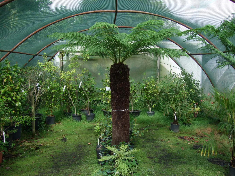 Exotic Plant Nursery Thenurseries