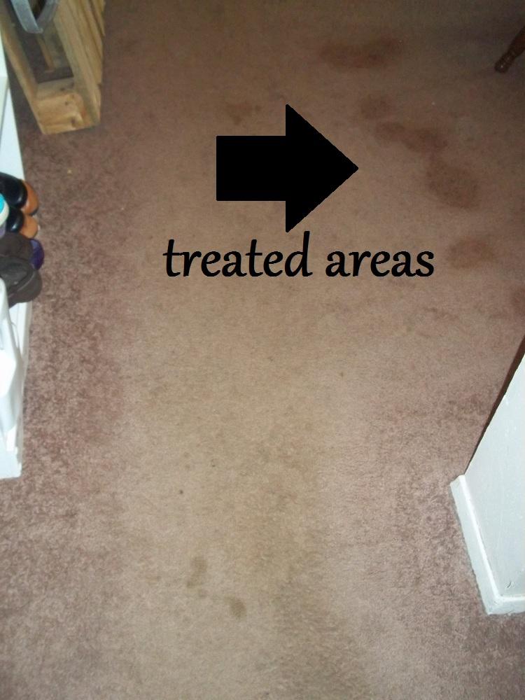 The retro modern mom homemade carpet shampoo solutioingenieria Images