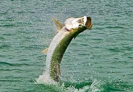 Ocean Fly Fishing
