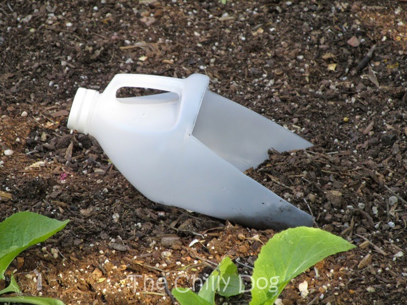 Learn how to recycle a plastic bottle into a handy garden scoop.