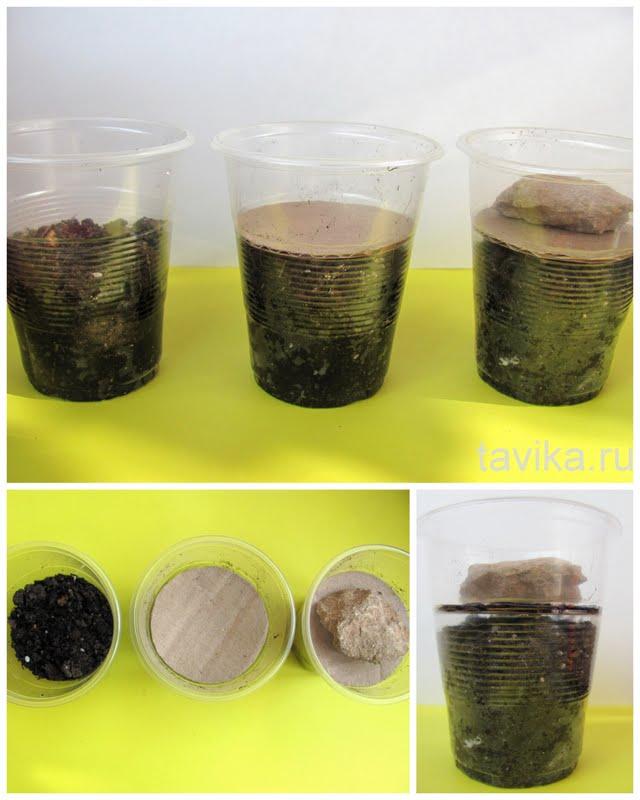 опыты с растениями для дошкольников