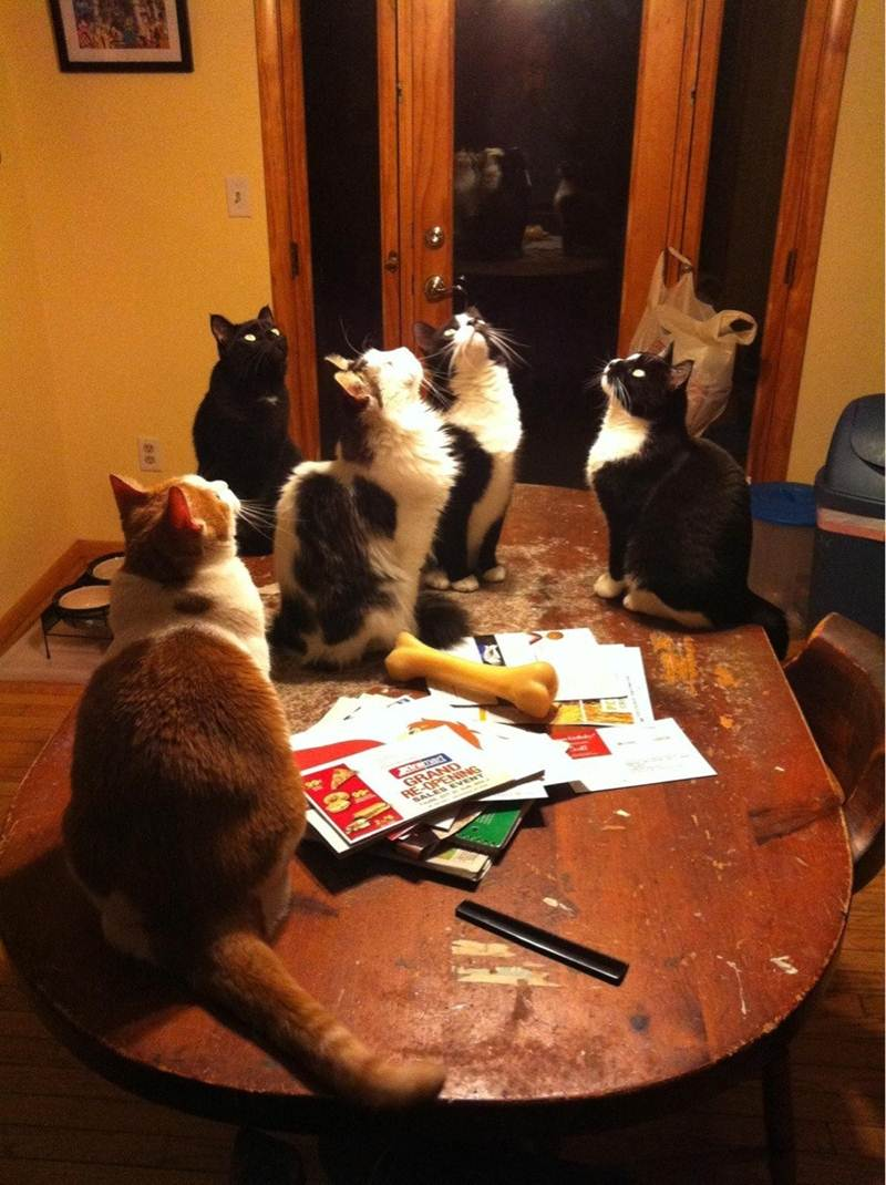 what are they looking at, funny cats, cat photos, cat pictures