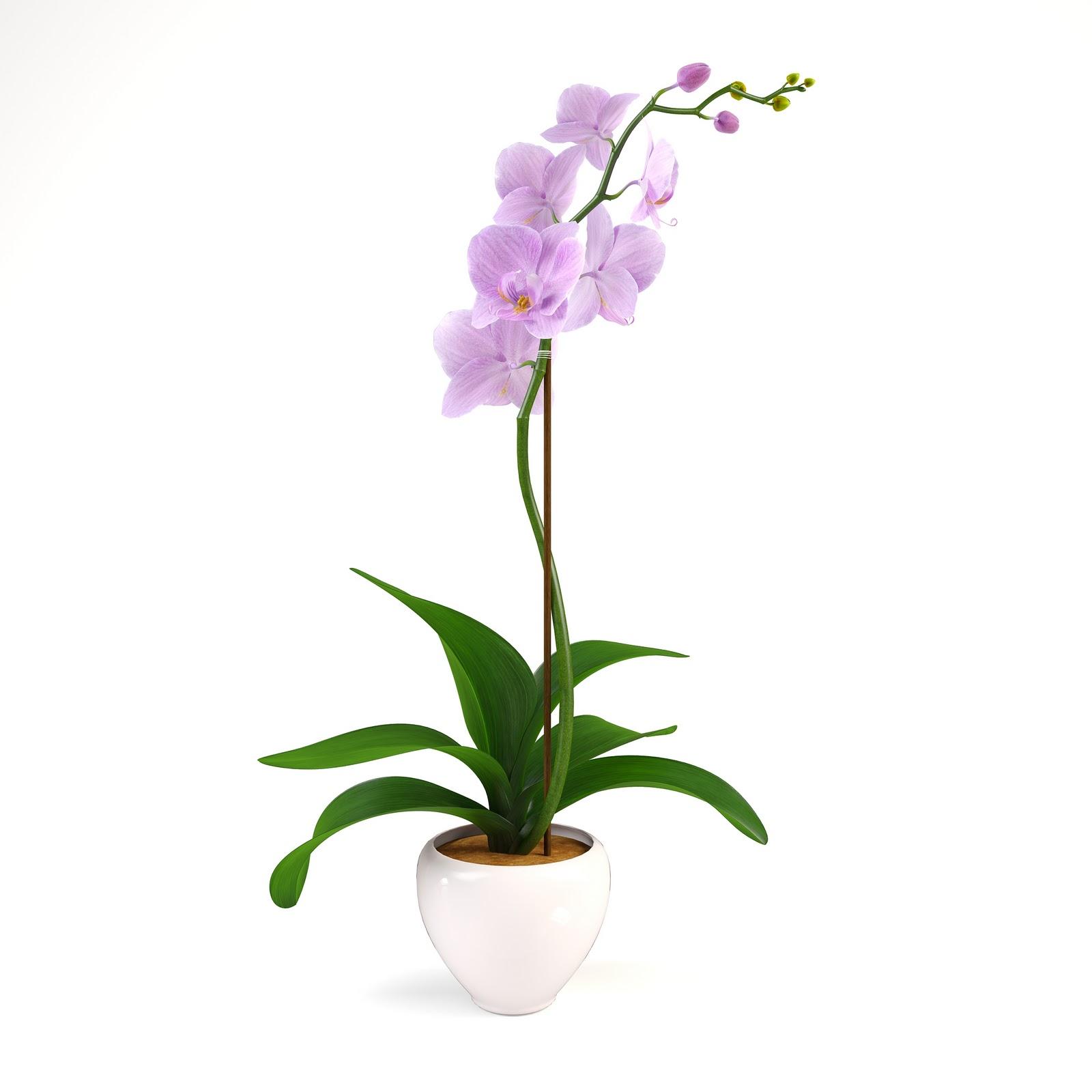Interior Design: 3D model Pink orchid