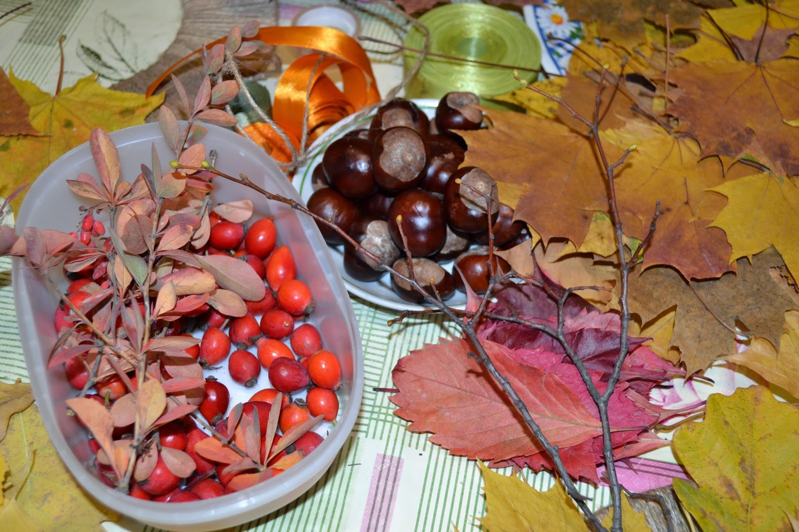 Когда и как выращивать рассаду перцев