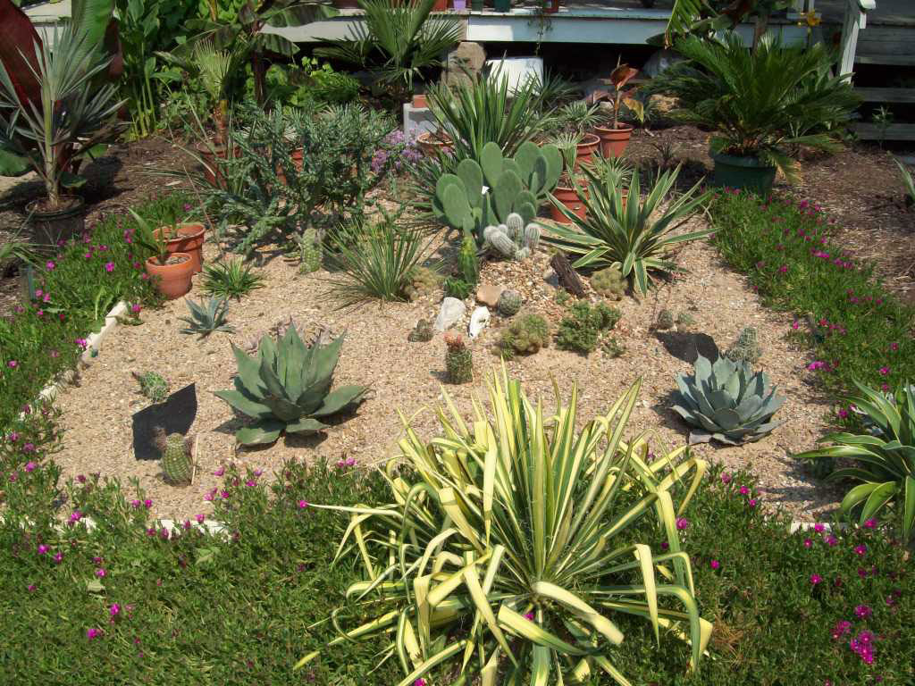 Photos Succulent Rock Garden Cacti. Second-sun.co