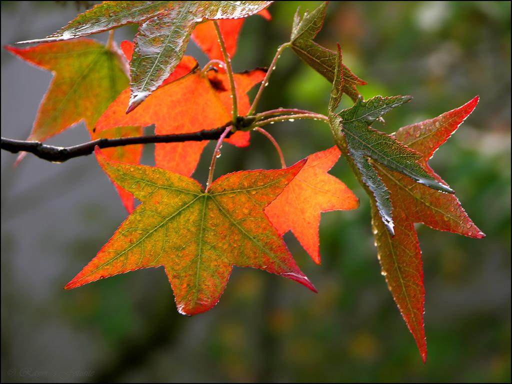 http://2.bp.blogspot.com/-DMWyxbp_Rlg/Tl80fyYGbKI/AAAAAAAAAQE/y4jqDK9szA0/s1600/herfst+5.jpg