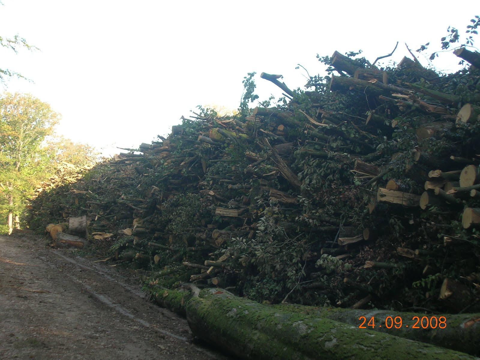 Forêts & Bois de lEst Le traitement mécanisé des  ~ Bois Energie Nord