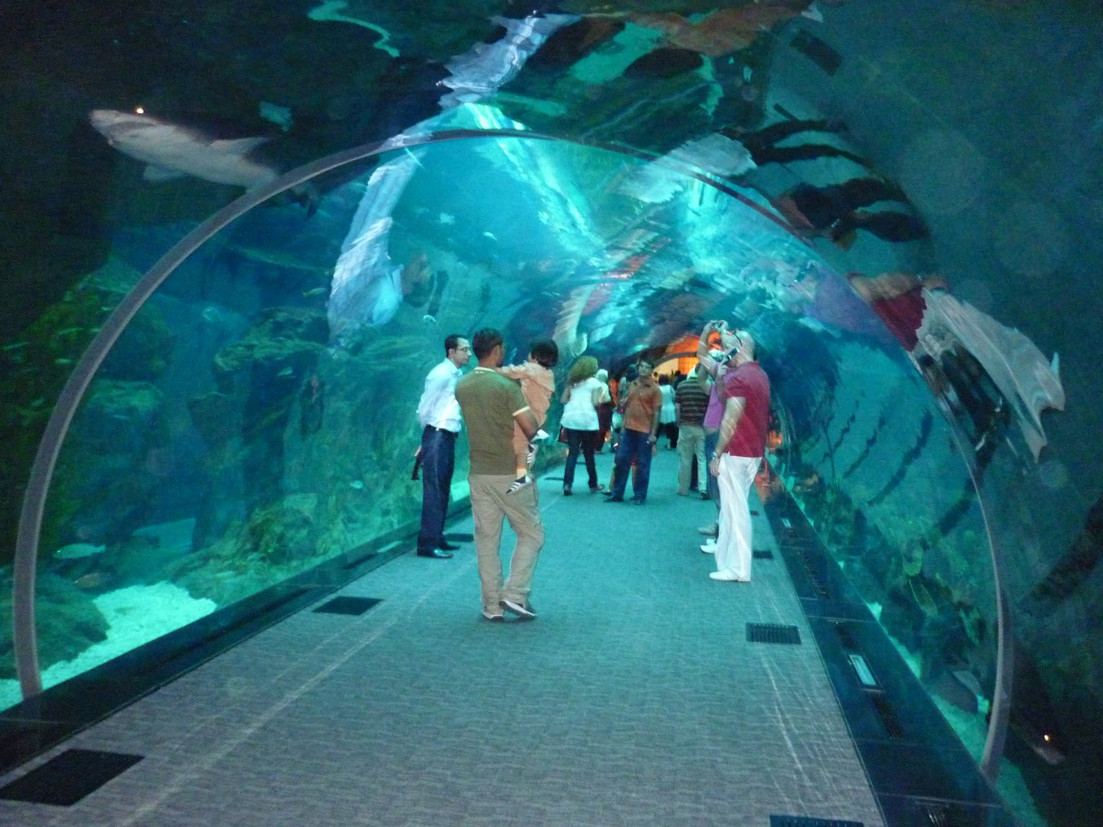 Images pk dubai aquarium for Aquarium video
