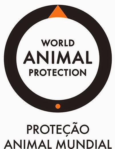 World Animal Protection Vacancy: Head of Campaigns - Bangkok, Thailand
