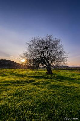 ambient light, evening, jenis cahaya dalam fotografi