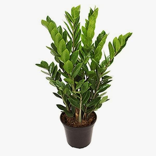 Plantas Para Ba O Feng Shui