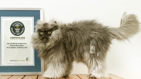 Colonel Meow Kucing yang berbulu paling panjang di dunia